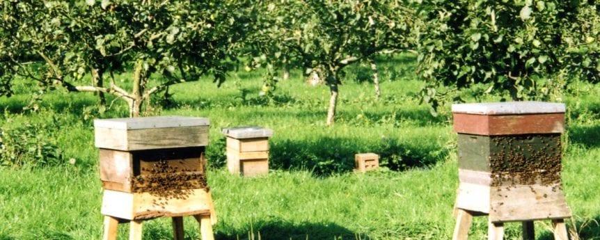 Bee hives Kingsbury